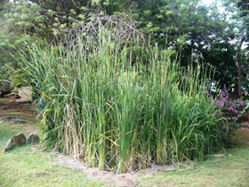 reed bed waste treatment